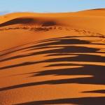 Schatten-Karawane (Sahara) © Roland Schweizer