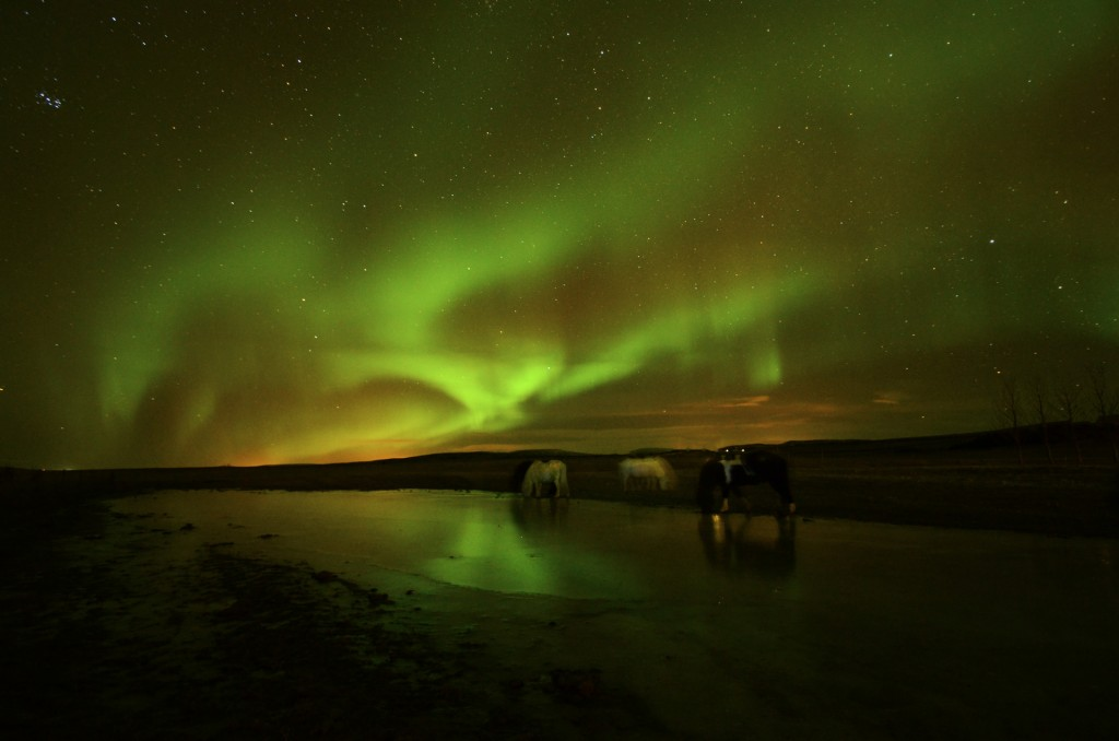 Horses under Northern Light (Island) © Roland Schweizer